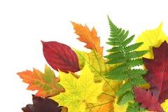 Σχέδιο φύλλων φθινοπώρου Στοκ Εικόνες