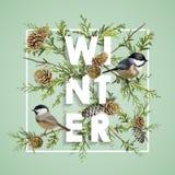 Σχέδιο χειμερινών Χριστουγέννων στο διάνυσμα Χειμερινά πουλιά με τα πεύκα Στοκ Φωτογραφία