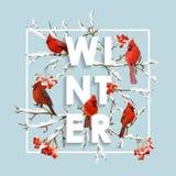 Σχέδιο χειμερινών Χριστουγέννων στο διάνυσμα Χειμερινά πουλιά με τα μούρα του Rowan Στοκ εικόνες με δικαίωμα ελεύθερης χρήσης