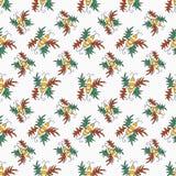Σχέδιο χρώματος κανθάρων Στοκ εικόνες με δικαίωμα ελεύθερης χρήσης