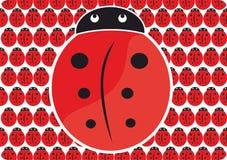 Σχέδιο ladybug Στοκ εικόνα με δικαίωμα ελεύθερης χρήσης