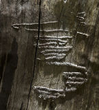 Σχέδιο Squiggly σε έναν νεκρό κορμό δέντρων Στοκ εικόνα με δικαίωμα ελεύθερης χρήσης