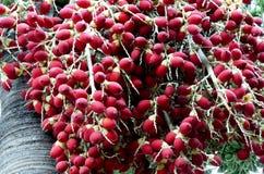 Σχίστε areca ή betel τα φρούτα φοινικών. Στοκ φωτογραφίες με δικαίωμα ελεύθερης χρήσης