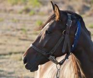 Σχεδιάγραμμα του προσώπου του αλόγου στοκ φωτογραφία με δικαίωμα ελεύθερης χρήσης