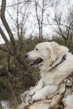 Σχεδιάγραμμα του σκυλιού στοκ φωτογραφίες με δικαίωμα ελεύθερης χρήσης