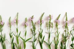 Σχεδιάγραμμα των wildflowers στοκ φωτογραφίες