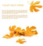 σχεδιάγραμμα φθινοπώρου στοκ φωτογραφίες με δικαίωμα ελεύθερης χρήσης