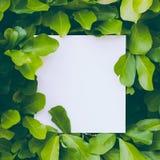 Σχεδιάγραμμα φιαγμένο από φύλλα με τη σημείωση καρτών εγγράφου Επίπεδος βάλτε απομονωμένο έννοια λευκό φύσης πράσινα φύλλα Δημιου Στοκ εικόνες με δικαίωμα ελεύθερης χρήσης