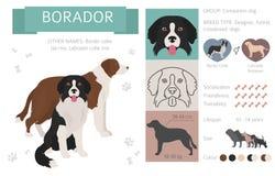 Σχεδιαστής, διασταύρωση, υβριδική συλλογή σκυλιών μιγμάτων που απομονώνεται στο λευκό Το επίπεδο ύφος clipart έθεσε ελεύθερη απεικόνιση δικαιώματος