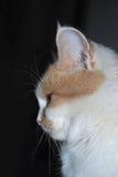 Σχεδιάγραμμα της κυρία-γάτας Στοκ εικόνες με δικαίωμα ελεύθερης χρήσης