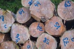 Σχεδιαγράμματα των κορμών δέντρων που κόβονται Στοκ Εικόνα