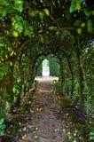 Σχηματισμένη αψίδα πορεία δέντρων μηλιάς Στοκ Φωτογραφίες