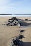 Σχηματισμοί βράχου στην αμμώδη παραλία Στοκ φωτογραφία με δικαίωμα ελεύθερης χρήσης