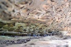 Σχηματισμοί βράχου στους υψηλούς βράχους, φρεάτια Tunbridge, Κεντ, UK Στοκ εικόνα με δικαίωμα ελεύθερης χρήσης