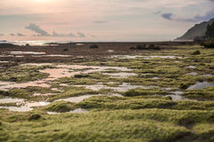 Σχηματισμοί βράχου at low tide στον ωκεανό Στοκ Εικόνες