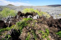 Σχηματισμοί βράχου Tsingy σε Ankarana, αγριότητα της Μαδαγασκάρης Στοκ Εικόνα