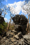 Σχηματισμοί βράχου Tsingy σε Ankarana, αγριότητα της Μαδαγασκάρης Στοκ εικόνα με δικαίωμα ελεύθερης χρήσης