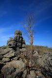 Σχηματισμοί βράχου Tsingy σε Ankarana, αγριότητα της Μαδαγασκάρης Στοκ φωτογραφία με δικαίωμα ελεύθερης χρήσης