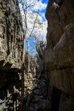Σχηματισμοί βράχου Tsingy σε Ankarana, αγριότητα της Μαδαγασκάρης Στοκ εικόνες με δικαίωμα ελεύθερης χρήσης
