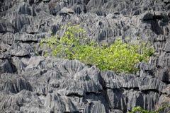 Σχηματισμοί βράχου Tsingy σε Ankarana, Μαδαγασκάρη Στοκ εικόνες με δικαίωμα ελεύθερης χρήσης