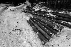Σχηματισμοί κούτσουρων Στοκ φωτογραφίες με δικαίωμα ελεύθερης χρήσης