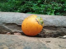 Σχισμένα arecanut φρούτα Στοκ Εικόνες