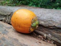 Σχισμένα arecanut φρούτα Στοκ Φωτογραφία