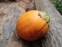 Σχισμένα arecanut φρούτα Στοκ φωτογραφία με δικαίωμα ελεύθερης χρήσης