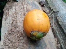 Σχισμένα arecanut φρούτα Στοκ εικόνες με δικαίωμα ελεύθερης χρήσης