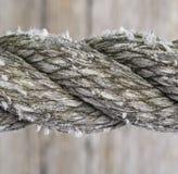 σχοινί βαμβακιού Στοκ Εικόνες