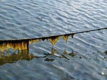 Σχοινί γραμμών του ορίζοντα της βάρκας που καλύπτεται με το φύκι και τα άλγη στοκ φωτογραφία με δικαίωμα ελεύθερης χρήσης