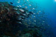 Σχολείο του glassfish ont τα συντρίμμια SS Yongala στοκ φωτογραφία με δικαίωμα ελεύθερης χρήσης