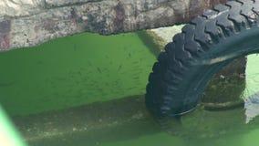 Σχολείο των ψαριών στο σαφές νερό κοντά στην αποβάθρα θάλασσας Πολλά ψάρια που κολυμπούν στο διαφανές θαλάσσιο νερό απόθεμα βίντεο