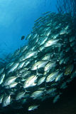 σχολείο ψαριών στοκ φωτογραφία με δικαίωμα ελεύθερης χρήσης