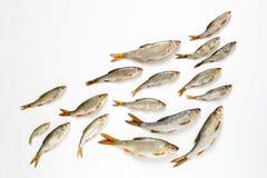 Σχολείο της έννοιας ψαριών Στοκ εικόνα με δικαίωμα ελεύθερης χρήσης