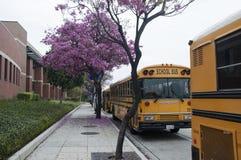 Σχολικά λεωφορεία Στοκ φωτογραφίες με δικαίωμα ελεύθερης χρήσης