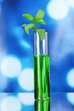 σωλήνας δοκιμής φυτών Στοκ φωτογραφίες με δικαίωμα ελεύθερης χρήσης