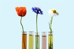 σωλήνες δοκιμής λουλ&omicron Στοκ φωτογραφία με δικαίωμα ελεύθερης χρήσης