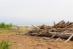 Σωροί του driftwood στις ακτές μιας ομιχλώδους λίμνης στοκ φωτογραφίες με δικαίωμα ελεύθερης χρήσης
