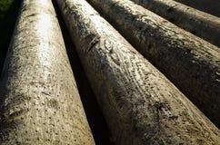 Σωροί των δέντρων Στοκ Εικόνες