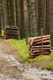 Σωροί των καταρριφθε'ντων κορμών δέντρων πεύκων στο αειθαλές κωνοφόρο δάσος στοκ φωτογραφίες