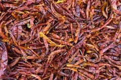 Σωροί των ξηρών κόκκινων τσίλι Στοκ Φωτογραφία