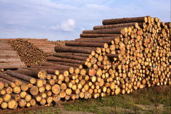 Σωροί των πριονισμένων κούτσουρων και του μπλε ουρανού δέντρων Στοκ Εικόνες