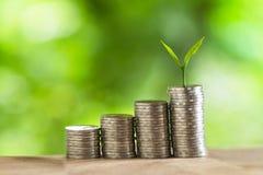 Σωροί χρημάτων νομισμάτων των δέντρων νομισμάτων στο σωρό των χρημάτων Στοκ Εικόνες