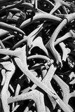 Σωρός ελαφόκερων στο Μαύρο Στοκ Φωτογραφίες