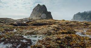 Σωρός θάλασσας και θάλασσα με τα ζιζάνια θάλασσας, το μπλε ουρανό και τα σύννεφα Στοκ Φωτογραφία