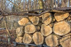 Σωρός κούτσουρων του παλαιού δέντρου ιτιών ως χειμερινά καύσιμα στοκ εικόνες με δικαίωμα ελεύθερης χρήσης