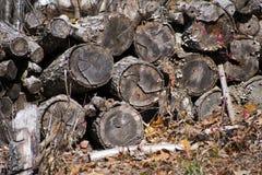 Σωρός κούτσουρων Στοκ φωτογραφία με δικαίωμα ελεύθερης χρήσης