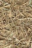Σωρός σανού μπαμπού ξηρός το φθινόπωρο, δασικό υπόβαθρο χρώματος μπαμπού με φύλλα κατασκευασμένο καφετί στοκ φωτογραφία με δικαίωμα ελεύθερης χρήσης
