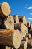 Σωρός της ξυλείας στο υπόβαθρο μπλε ουρανού στοκ φωτογραφία με δικαίωμα ελεύθερης χρήσης